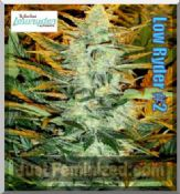 low ryder # 2 where to buy automatic marijuana female seeds